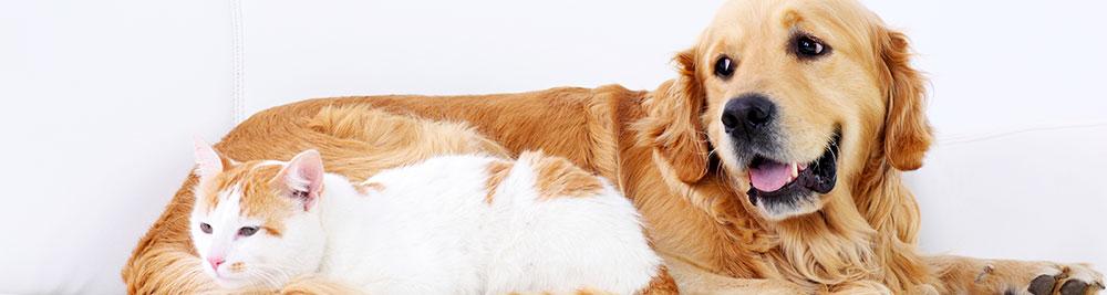 Top Tips For International Pet Transport Blog Grace